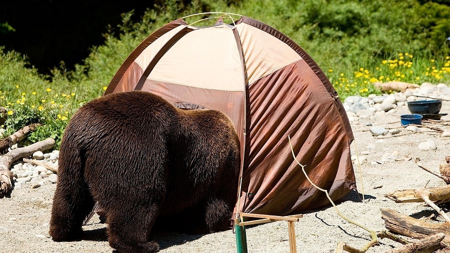 Bears and camping