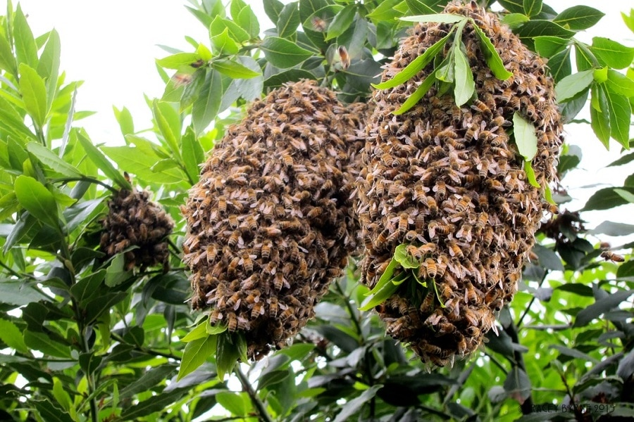 Bees and wasps on the tree
