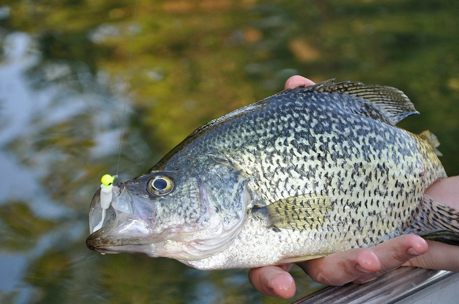 Best fishing times a briefer on ideal fishing times for for Best crappie fishing times