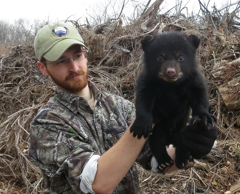 Don't hunt bear cubs