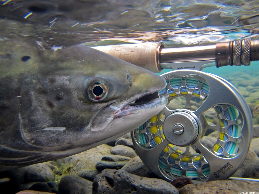 Fishing reel and fish under water