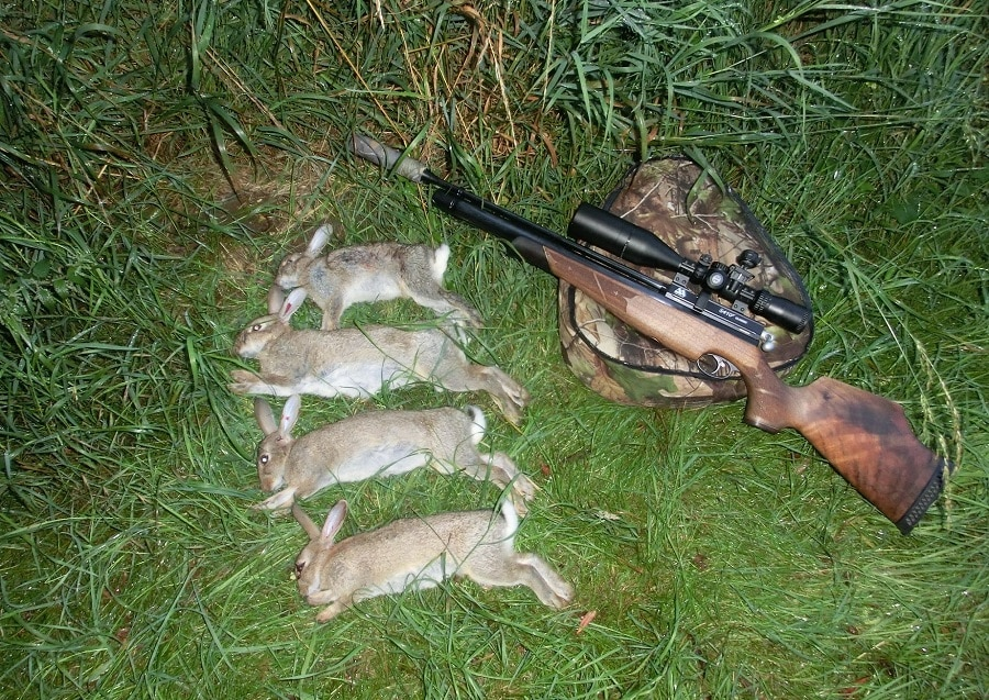 Hunting Rabbits