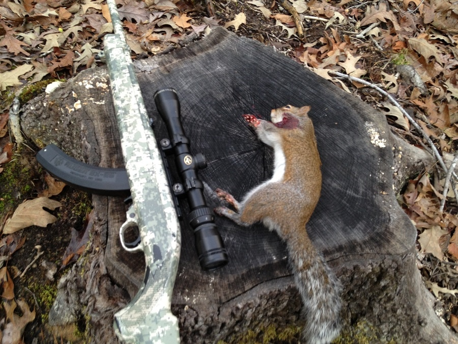 Squirrel and a rifle