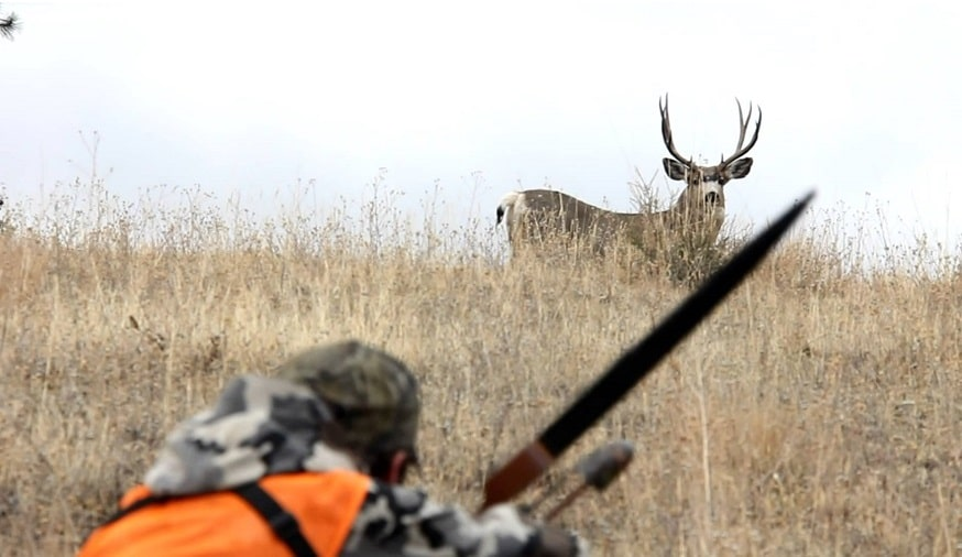Tips for How to Hunt Deer