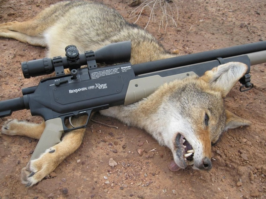 Benajmin rifle on Coyote