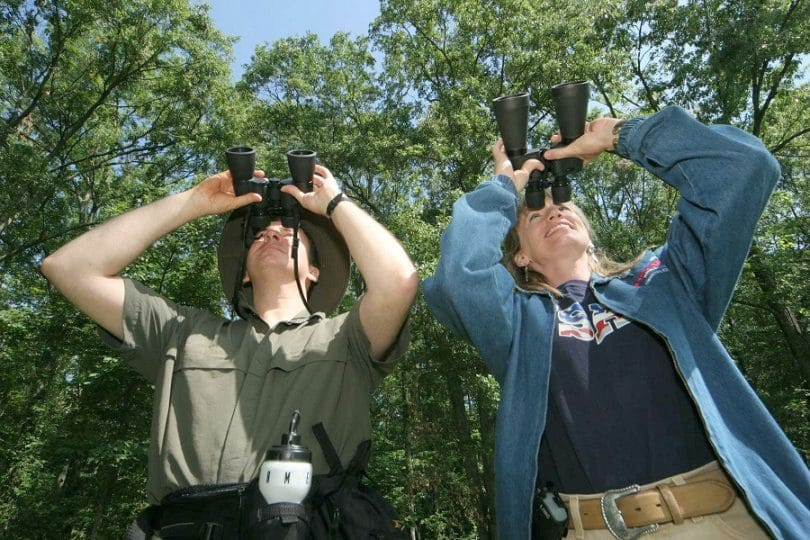 Best Compact Binoculars: Experience Wildlife Closely