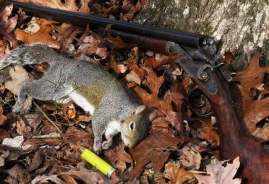 Hunting squirell tips
