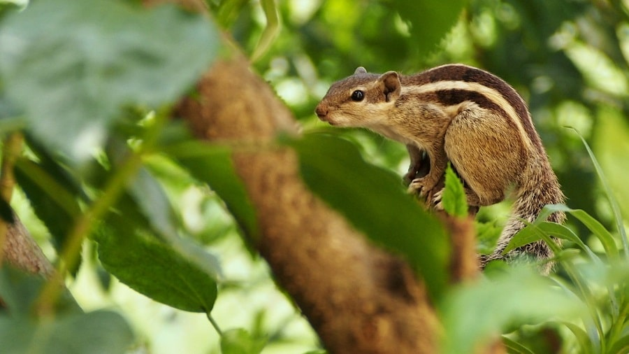 Squirell in the tree