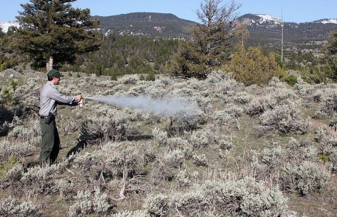 man spraying bear spray