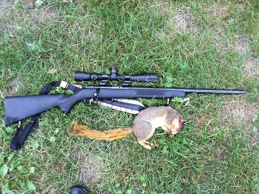 Firearm to Select for Squirrel Hunting