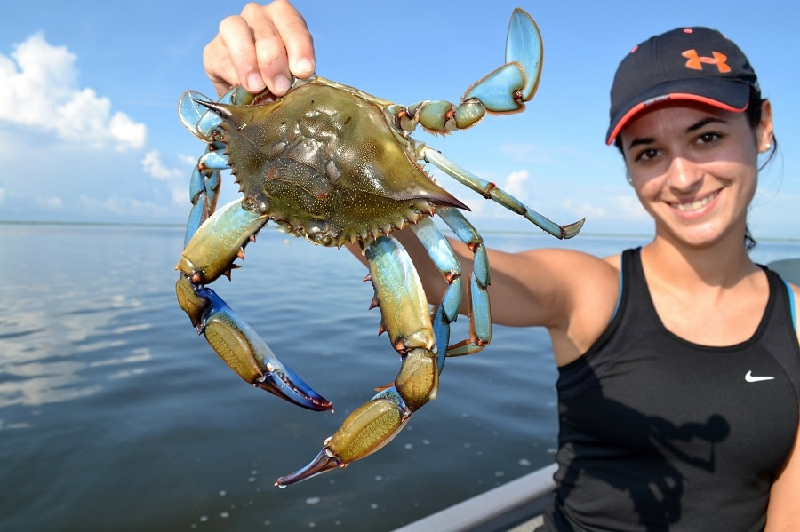 How to catch crabs crabbing tips that will keep your pot full for Blue crab fishing