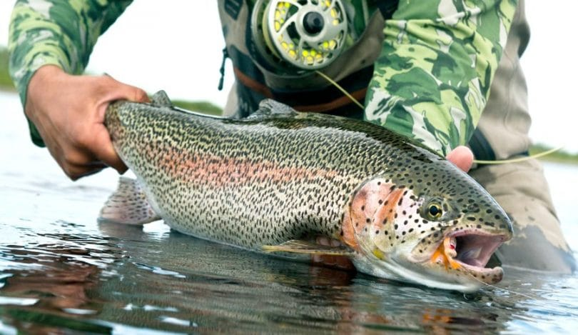 Catch Rainbow Trout