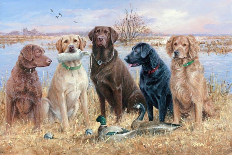 Labradors for waterfowl hunting