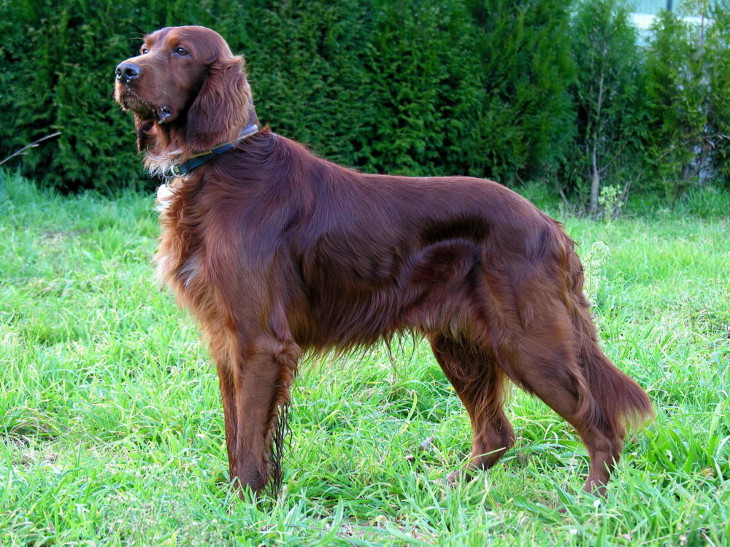 Breeds of rabbit hunting dogs