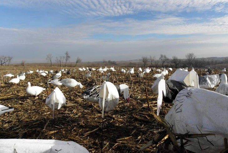 Snow goose decoy