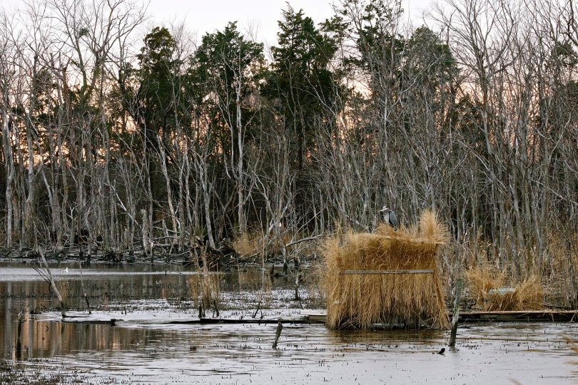 Duck blind near a lake