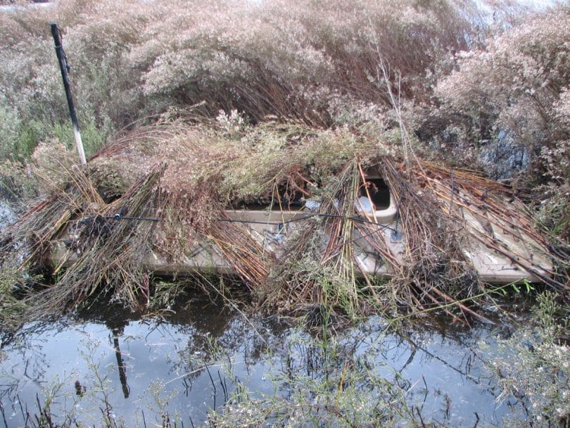 duck blind from tree braches