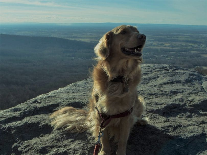 dog on a cliff