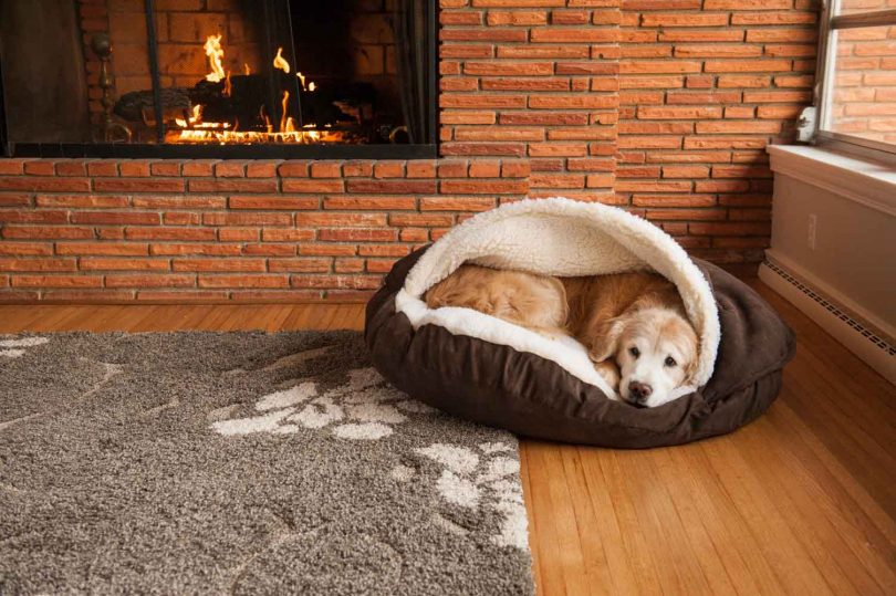 Enclosed bed for dog
