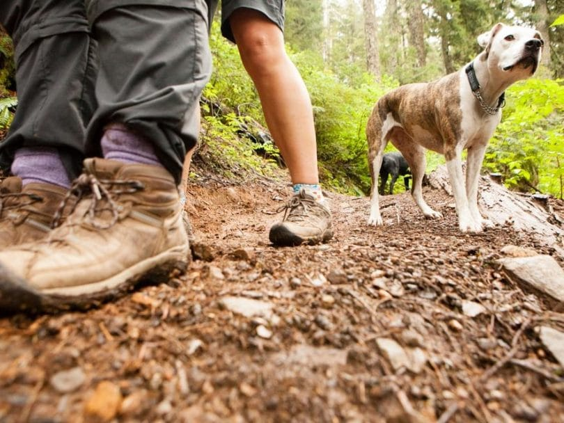 Low shot of a dog on a trail