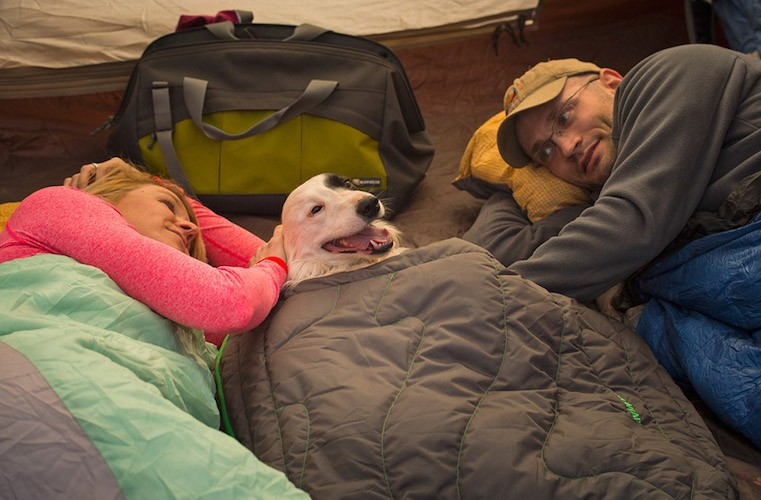 Dog sleeps in the tent