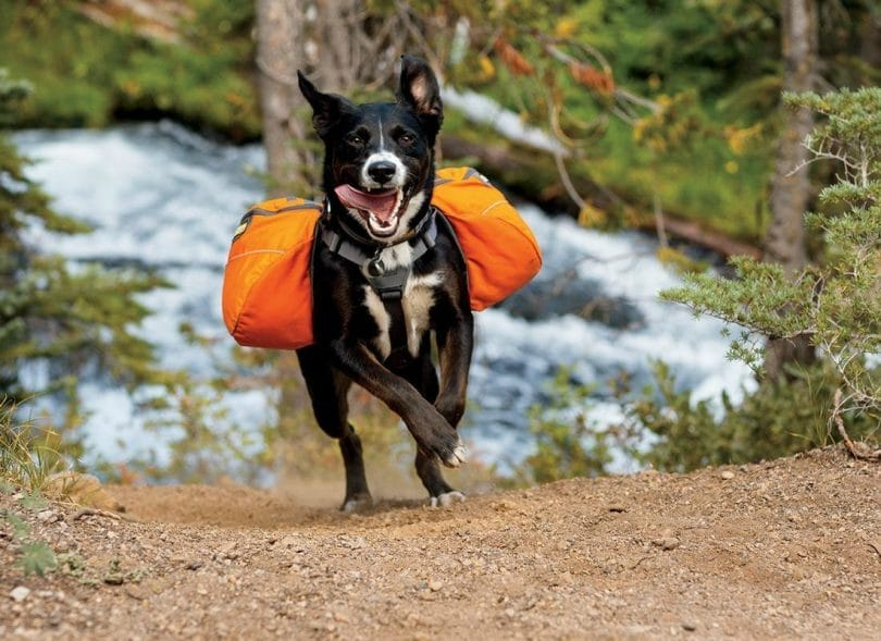 Waterproof Dog Backpack | Cg Backpacks