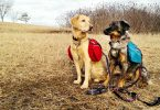 Best dog backpacking gear