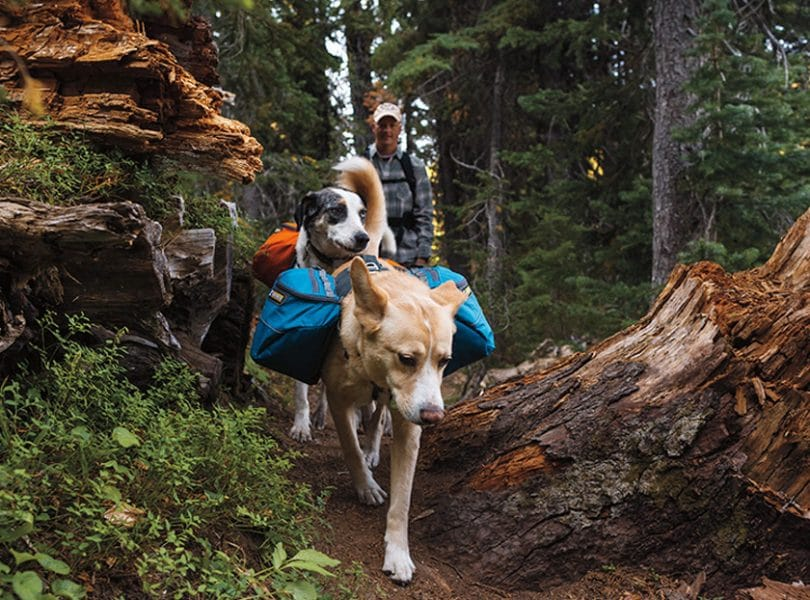 Hiking gear for dogs