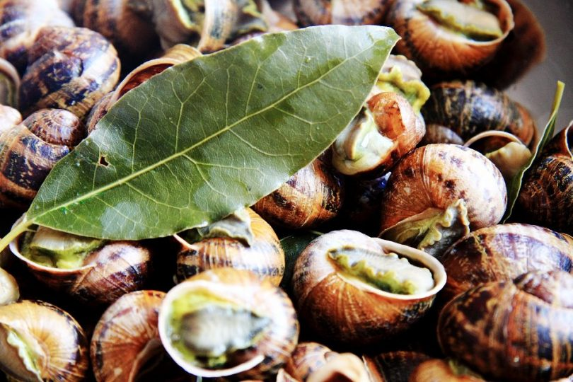 edible snails featured