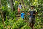 people hiking in the jungle