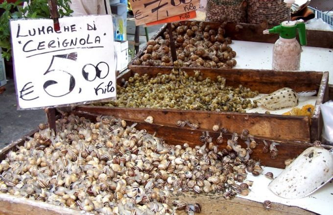 snails in a store