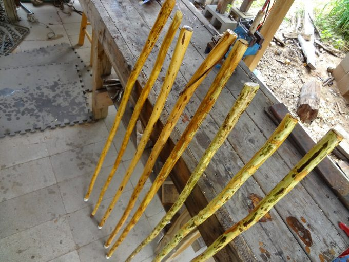 Drying walking stick