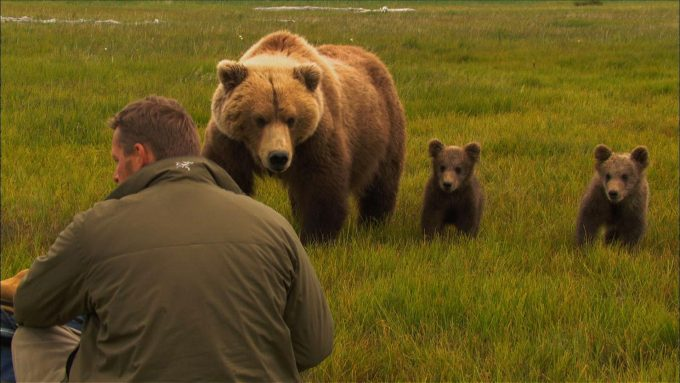 Human and bear behaviour