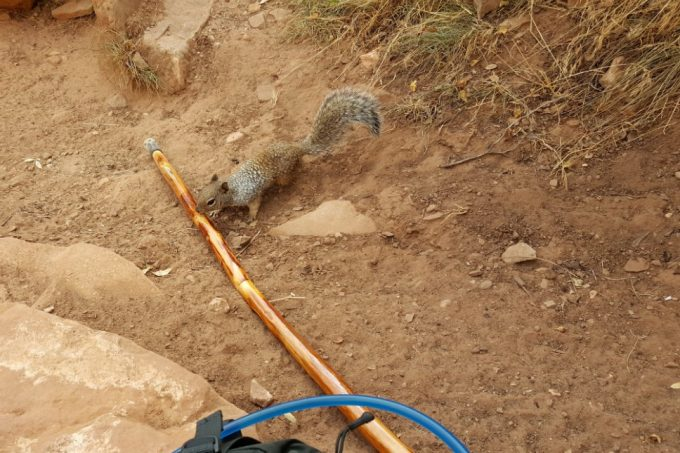 hiking stick and a squirrel