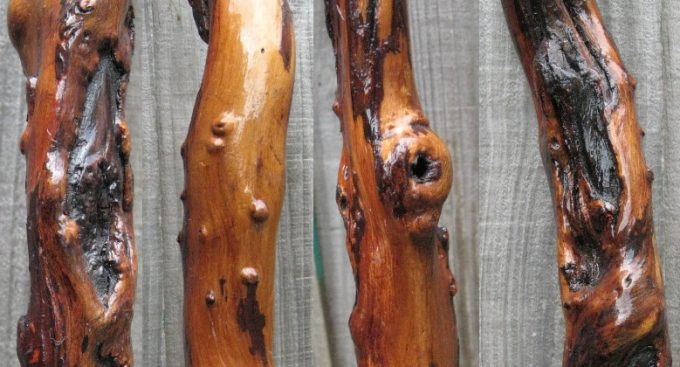 hiking stick wood aging
