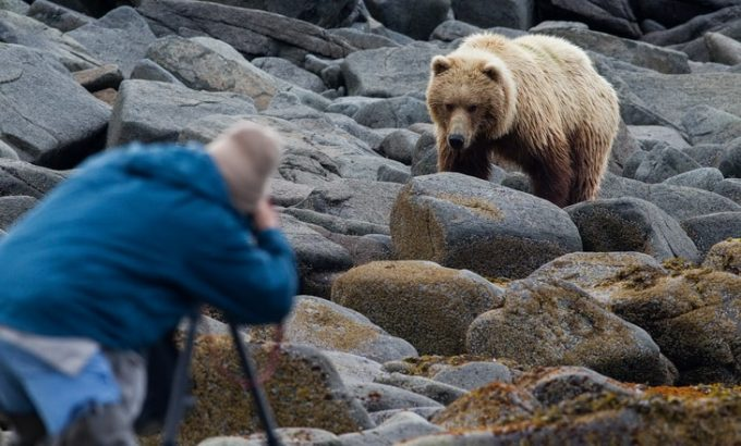 taking photo of a bear