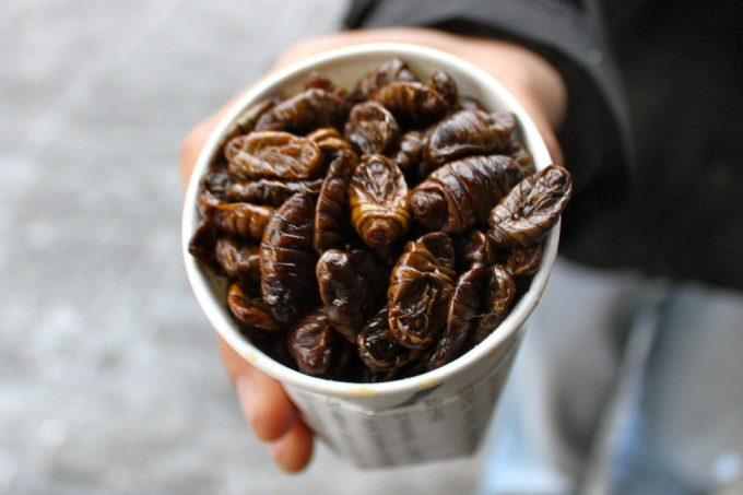 edible bugs in a cup