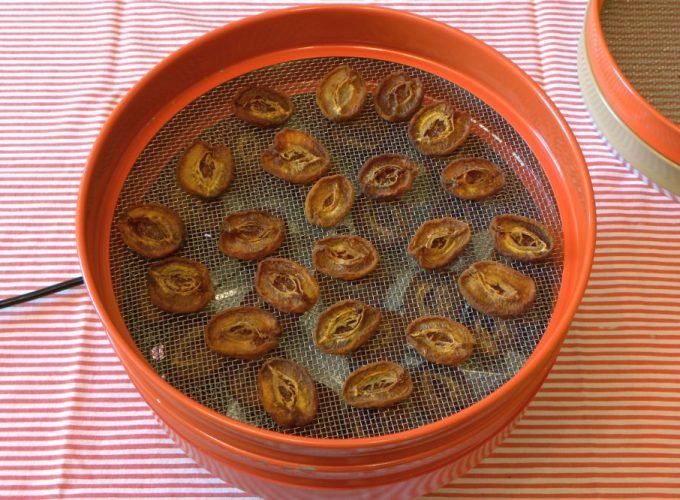 drying fruit in dehydrator