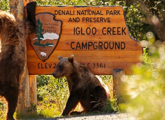bears on campground