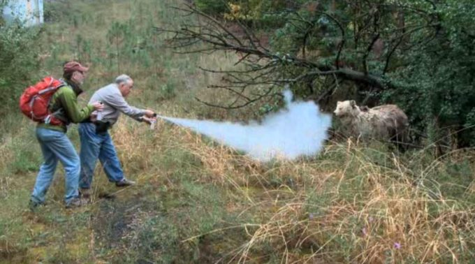 spraying bear spray