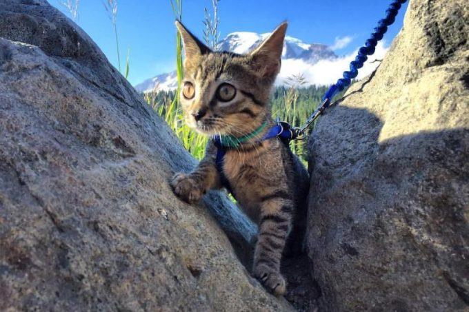 Cat Hiking in the Rocks