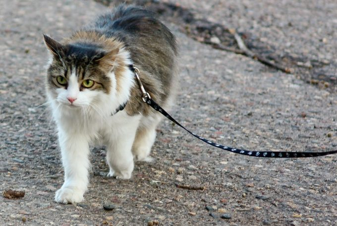 Cat is Hiking